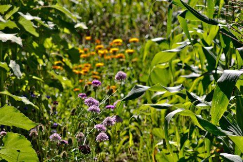 Blumenvielfalt 2016